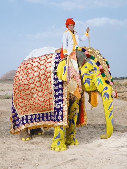 08-india-elephant-painted-yellow-blue-florets-580v