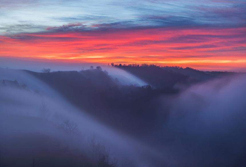 Morning fog   moss and fog