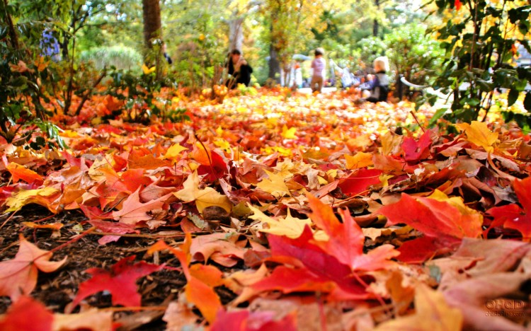 fall-leaves-gardens-to-love_Fall-Spring-Leaves-Autumn-Wallpaper-PC3
