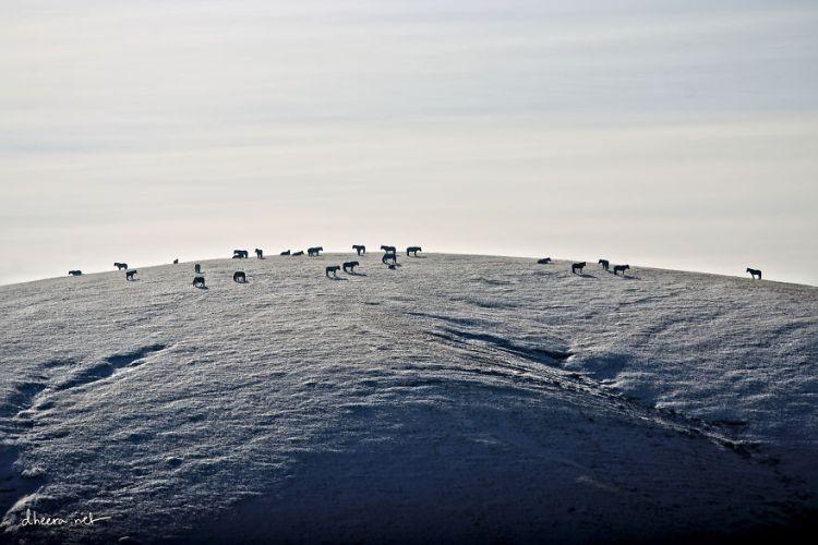 Winter-in-Mongolia3__880