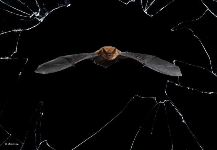 bat flying by broken window