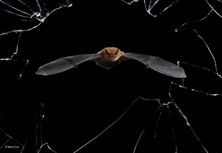 bat flying by broken window