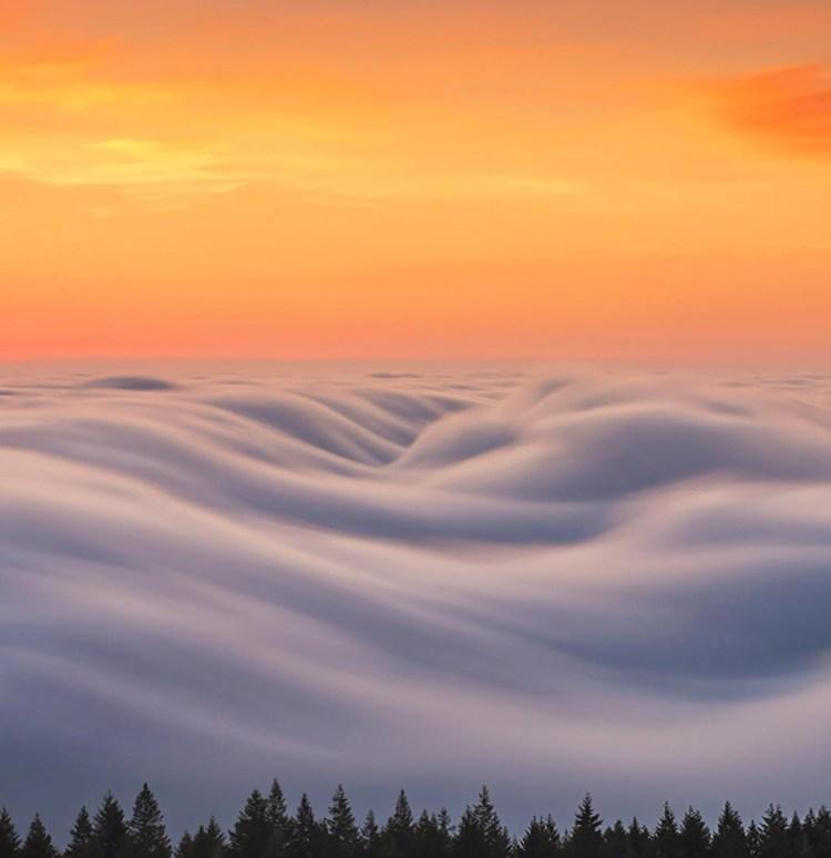 marin-fog-2-moss-and-fog