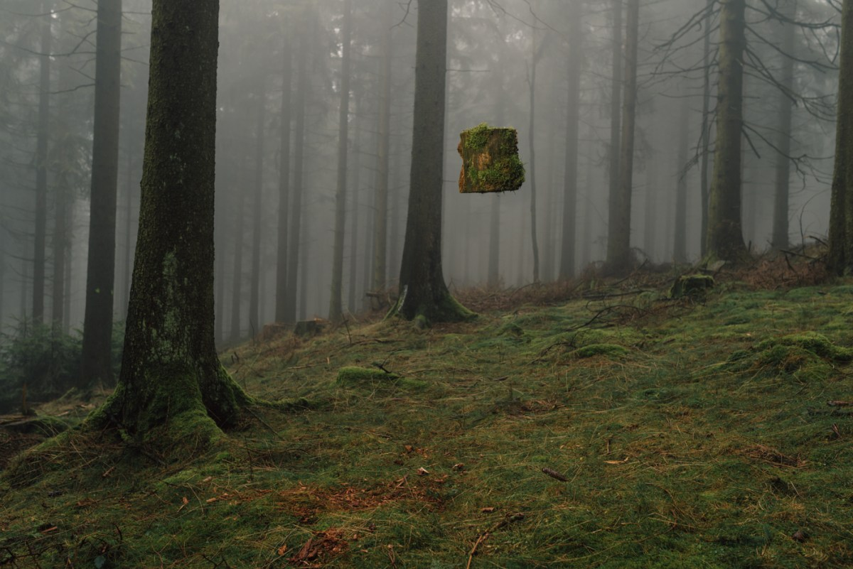floating-forest-moss-and-fog-1