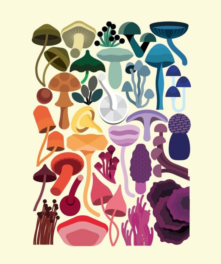 rob-bailey-fungus-moss-and-fog