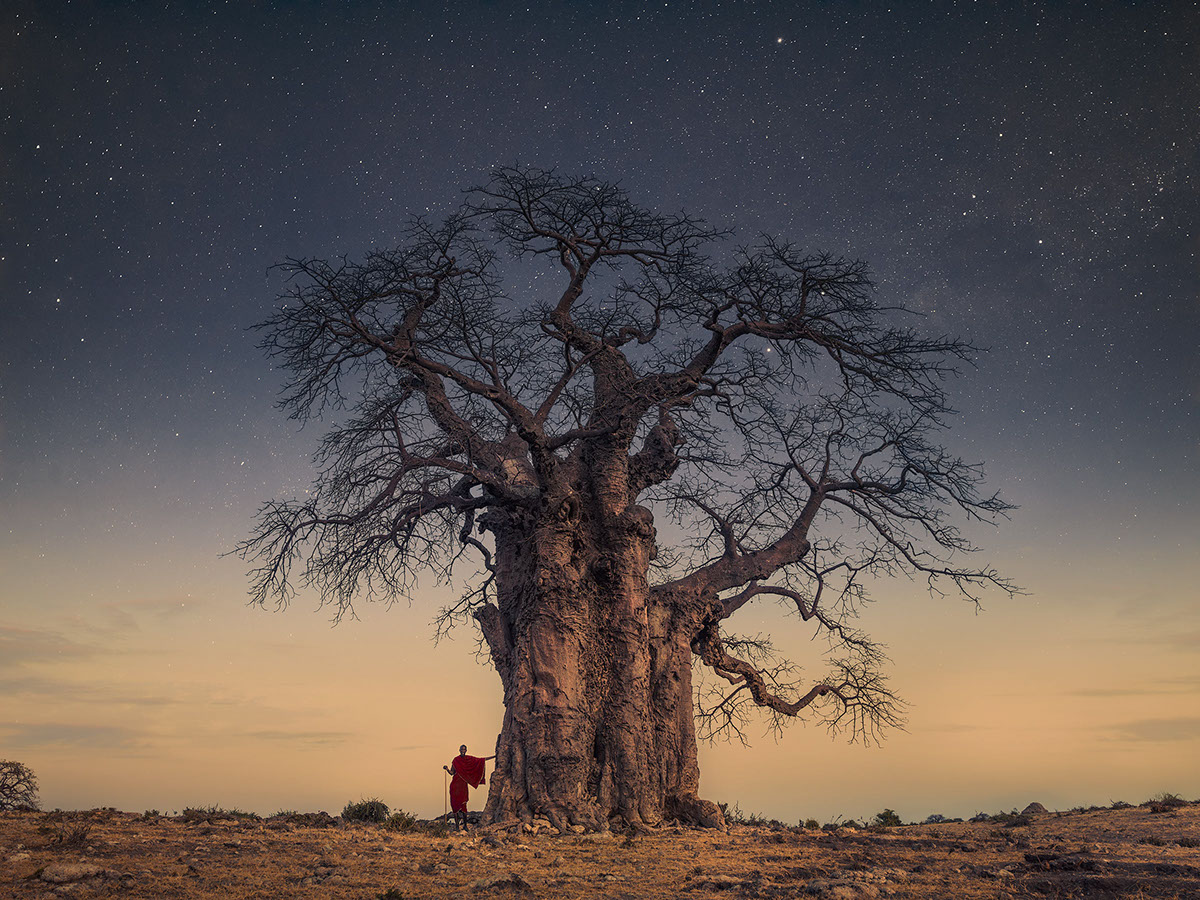 beautiful baobab nighttime moss and fog