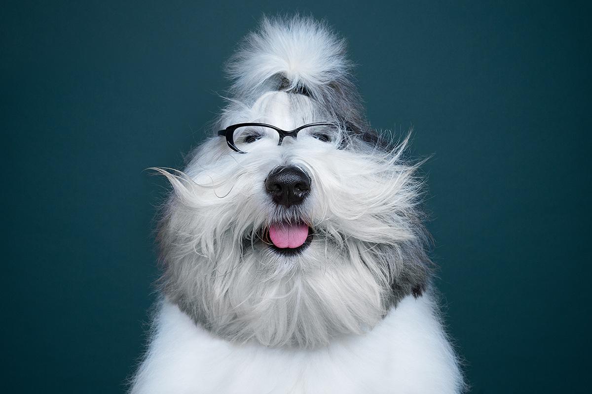 dog show moss and fog 3