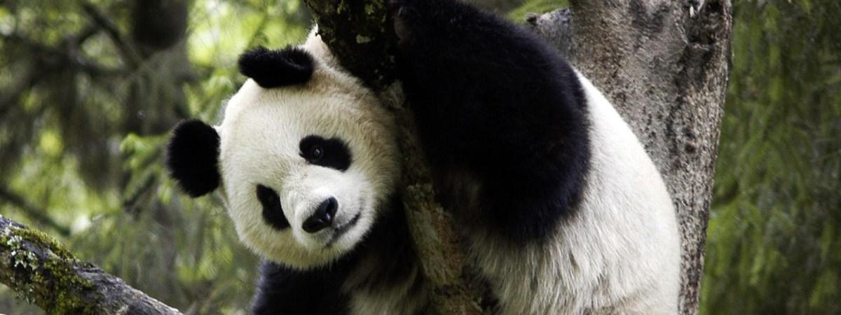 panda moss and fog