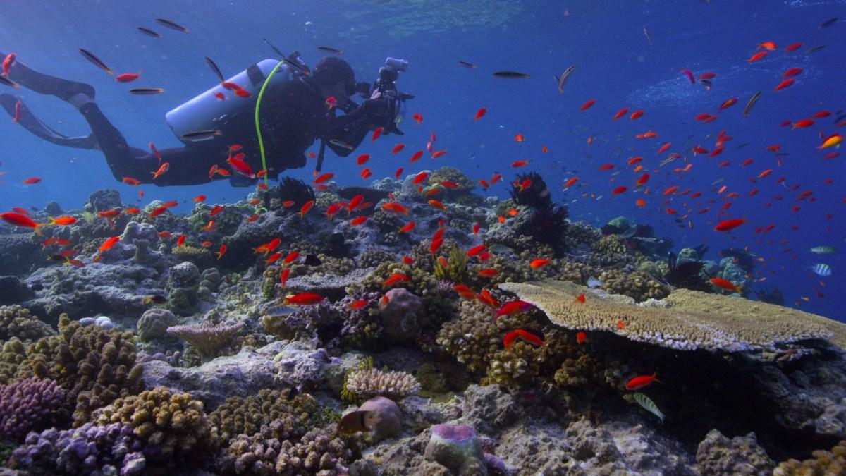 chasing-coral-still_14