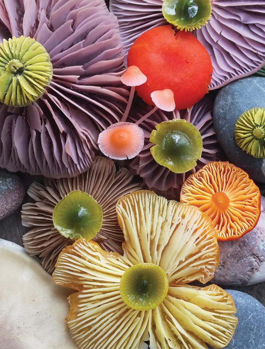 Wild Mushroom Menagerie moss and fog 3