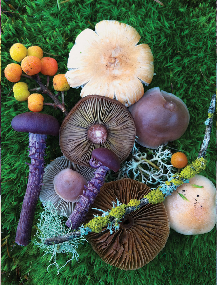 Wild Mushroom Menagerie moss and fog 5