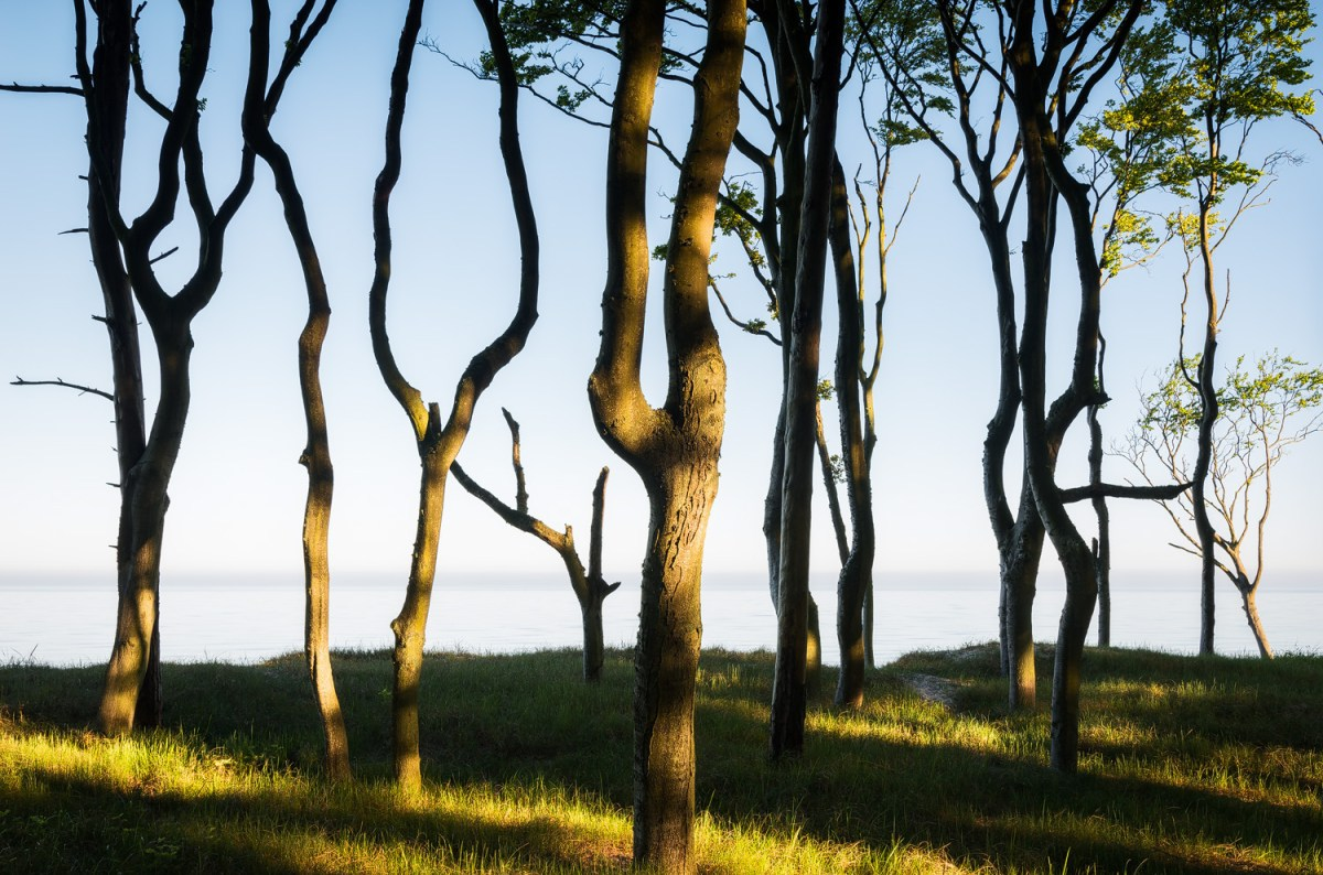 baltic coast trees moss and fog 7