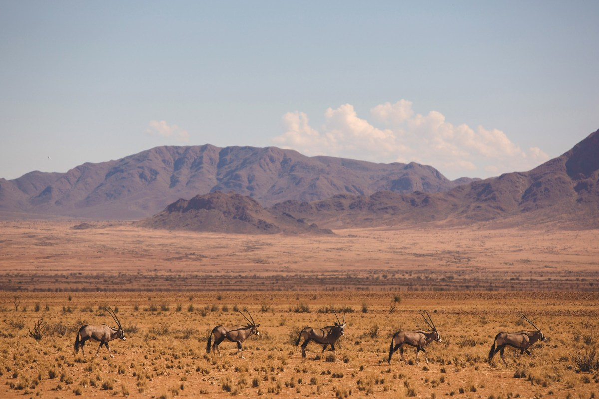 namibia travel moss and fog 3