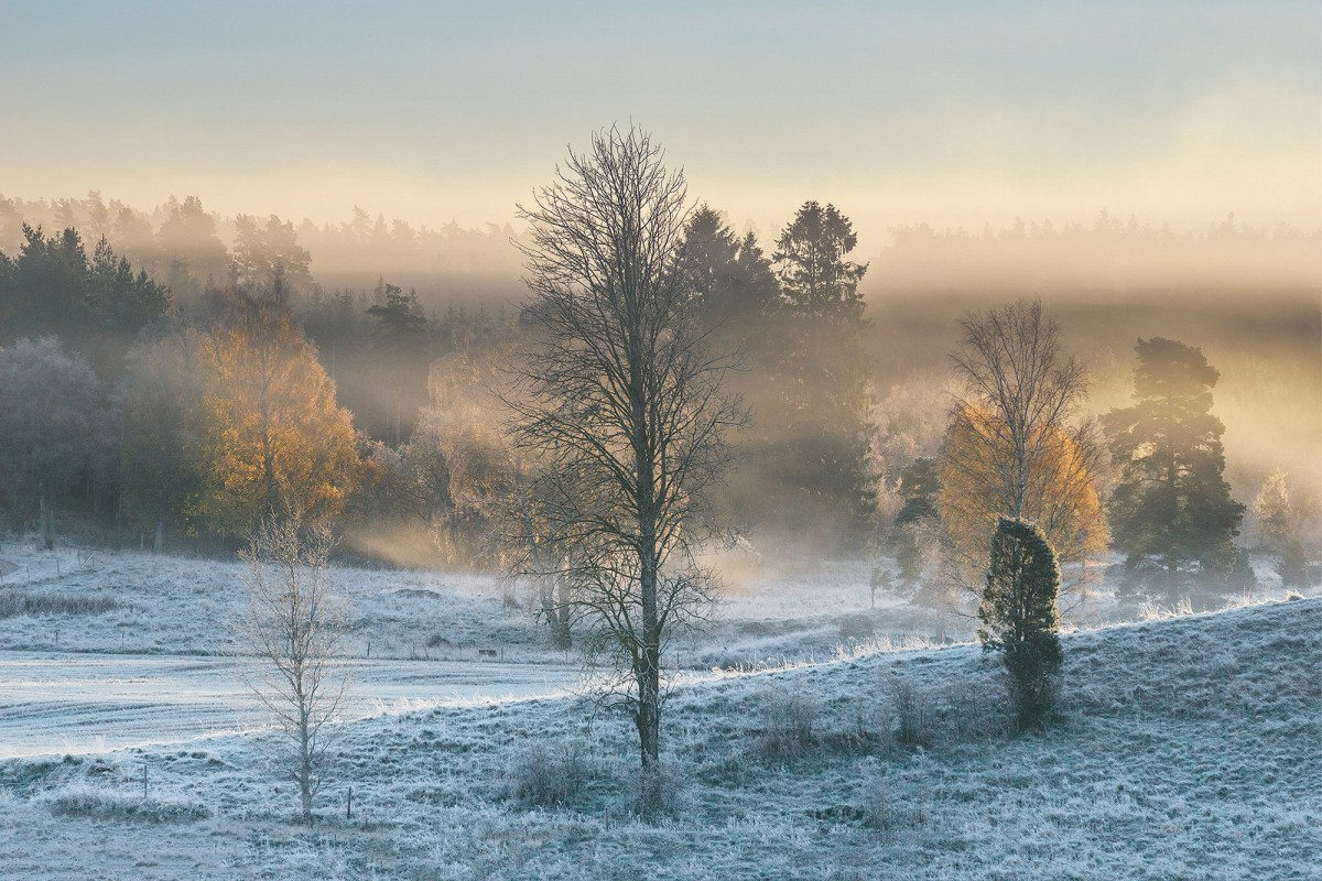 first-frost-moss-and-fog