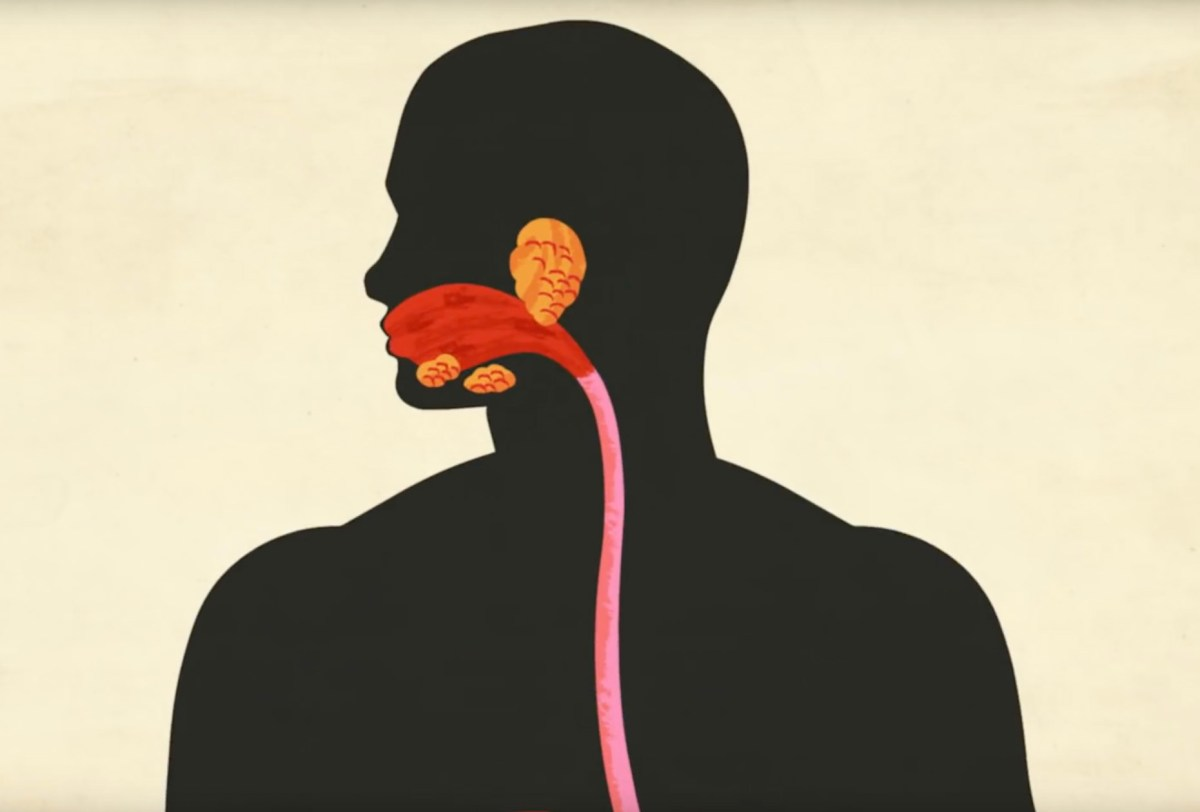 Explaining the digestive system through video