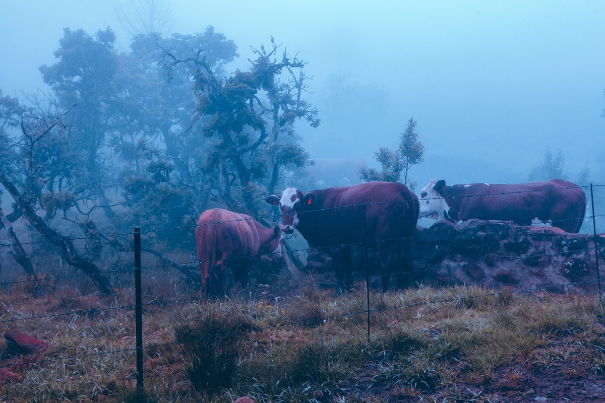 Morning-walks-south-africa-moss-and-fog-11