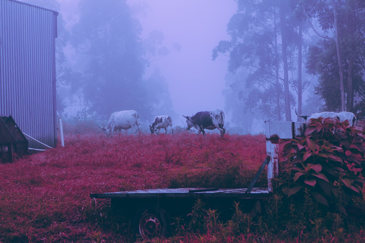 Morning-walks-south-africa-moss-and-fog-2