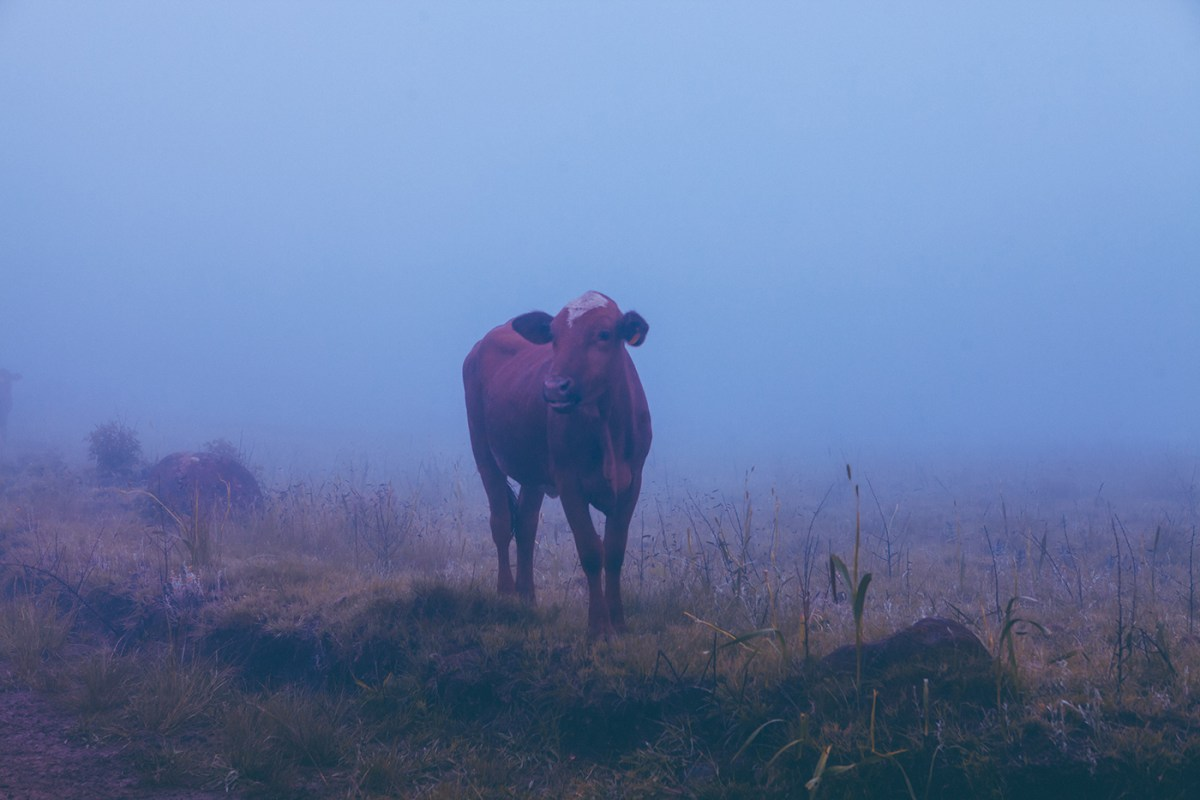 Morning-walks-south-africa-moss-and-fog-7