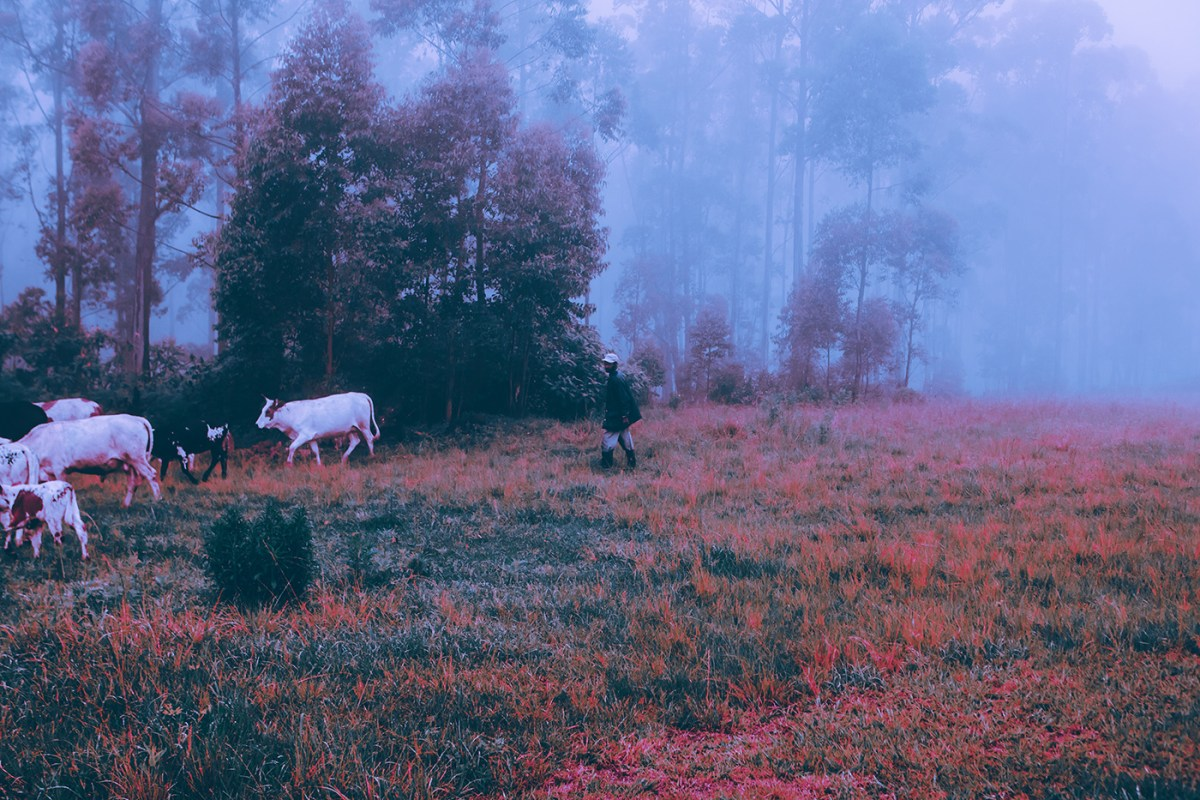 Morning-walks-south-africa-moss-and-fog-9