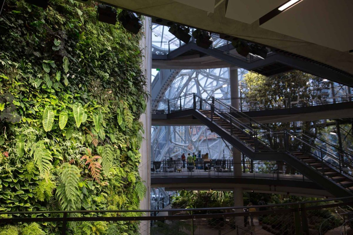 amazon-spheres-moss-and-fog-1.5