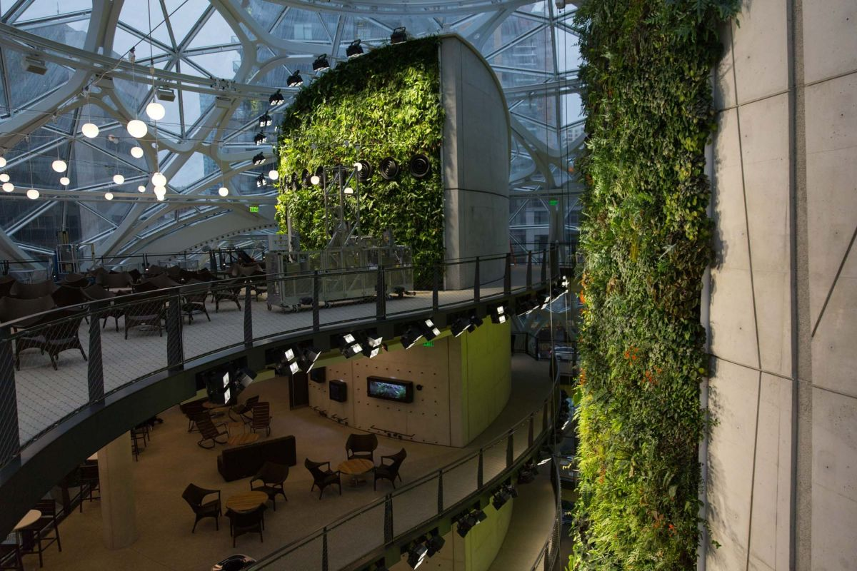 amazon-spheres-moss-and-fog-17