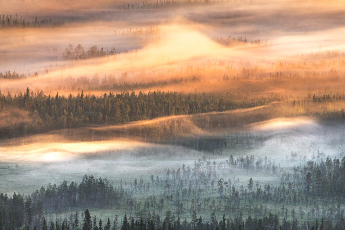 Foggy Finnish Forest