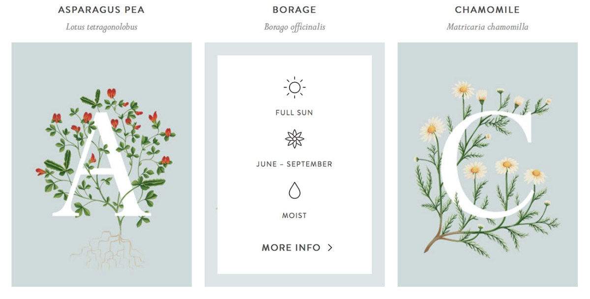 edible-plants-descriptions-moss-and-fog