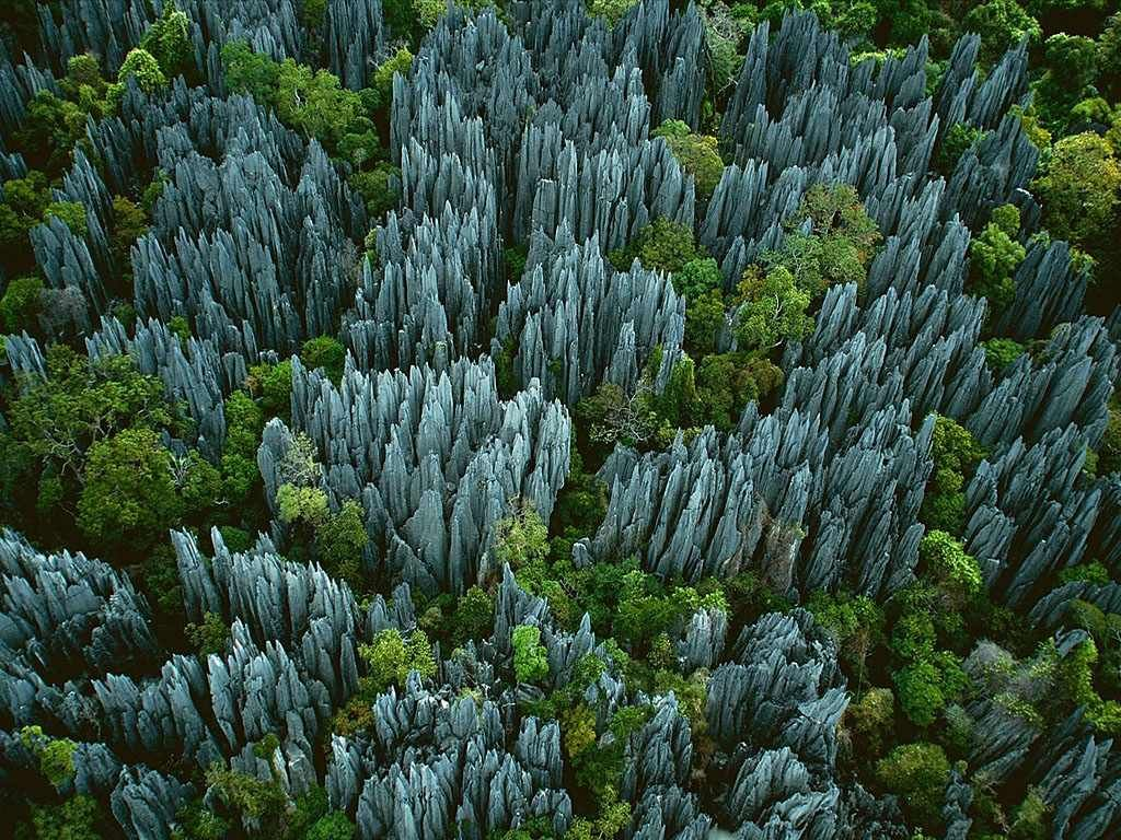 stone-forest-moss-and-fog-6