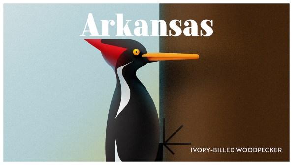Endangered Animals Moss and Fog Arkansas