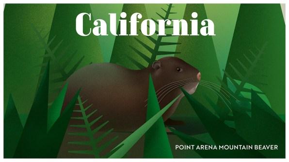 Endangered Animals Moss and Fog California