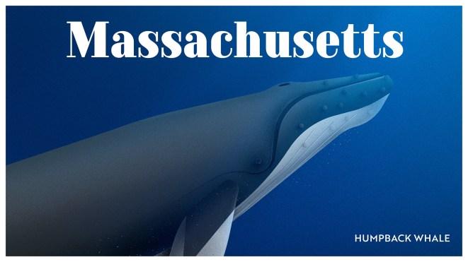 Endangered Animals Moss and Fog Massachusetts