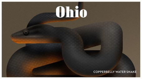 Endangered Animals Moss and Fog Ohio
