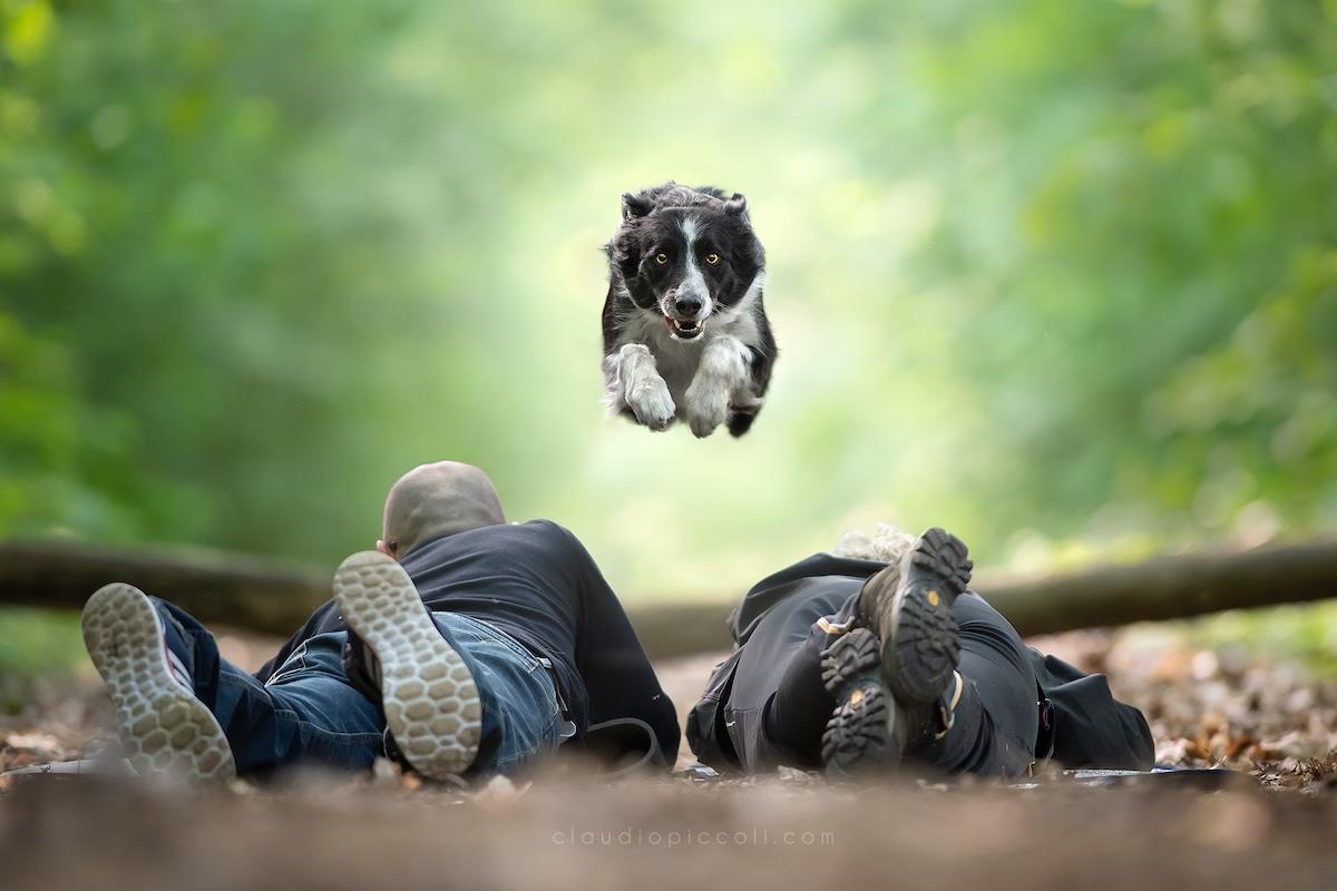 claudio-piccoli-dogs-in-action-1