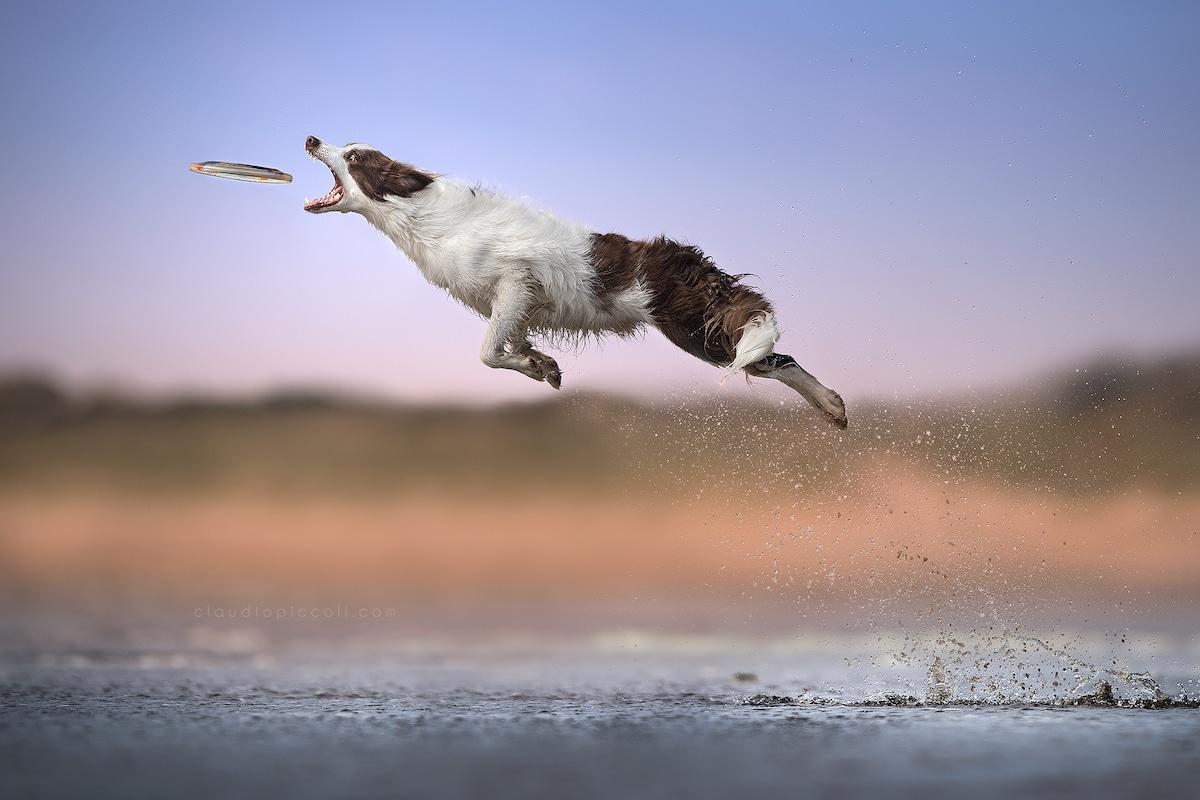 claudio-piccoli-dogs-in-action-3
