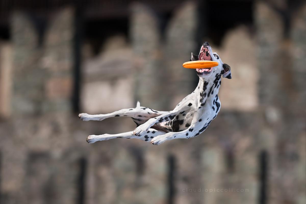 claudio-piccoli-dogs-in-action-4