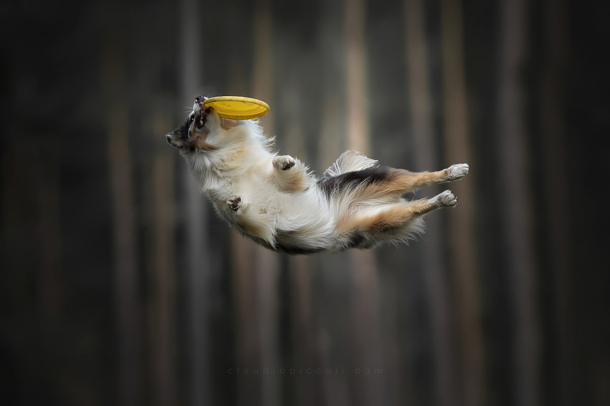 claudio-piccoli-dogs-in-action-8