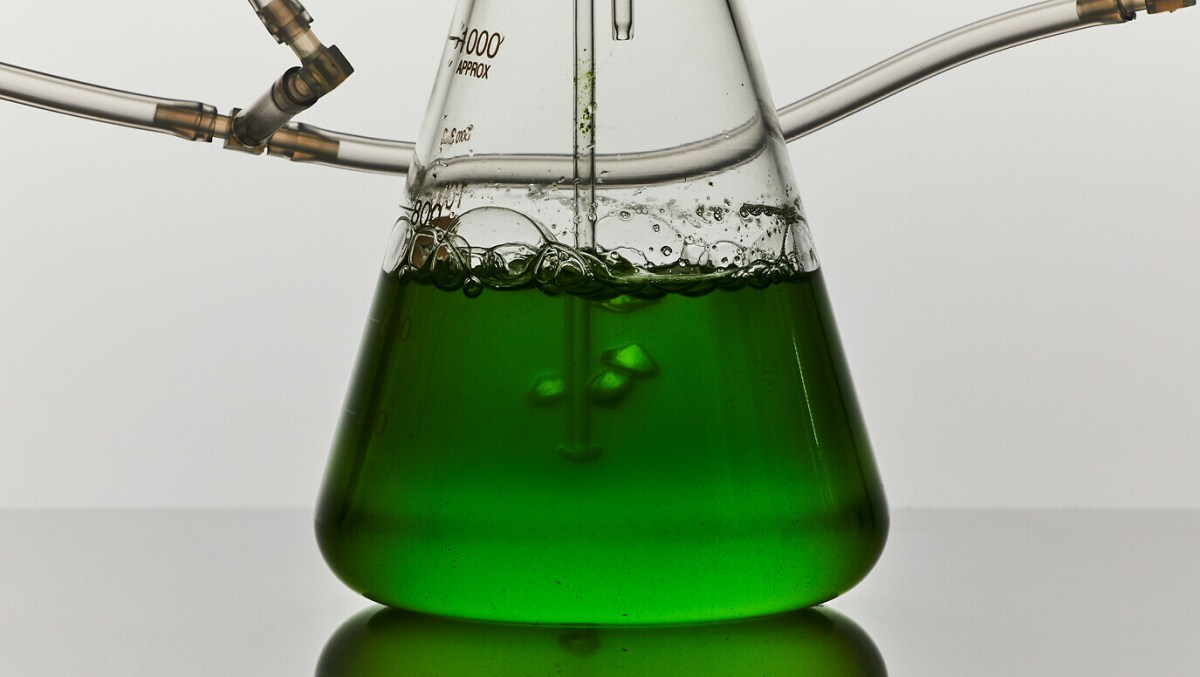 plant-and-algaet-91-1376-1376x776