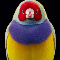 Tim Flach Shows Us Beautiful and Endangered Birds