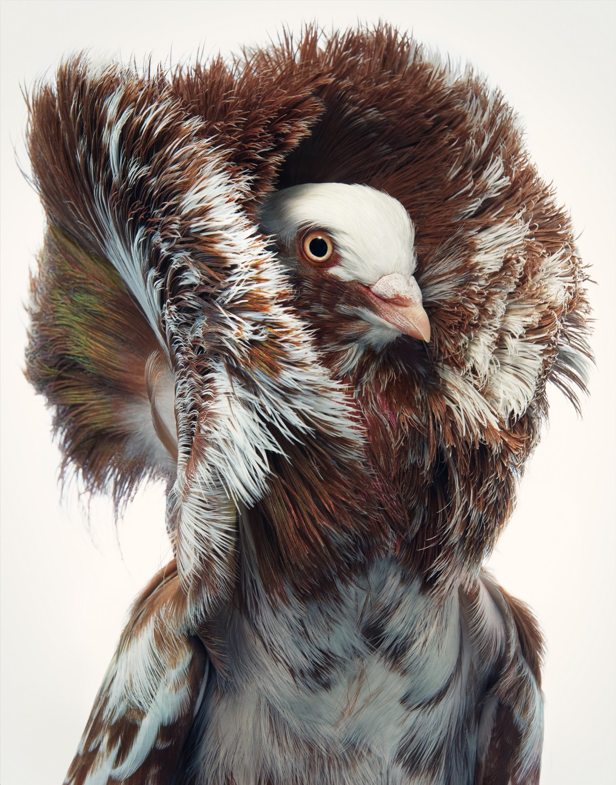 tim-flach-Jacobian