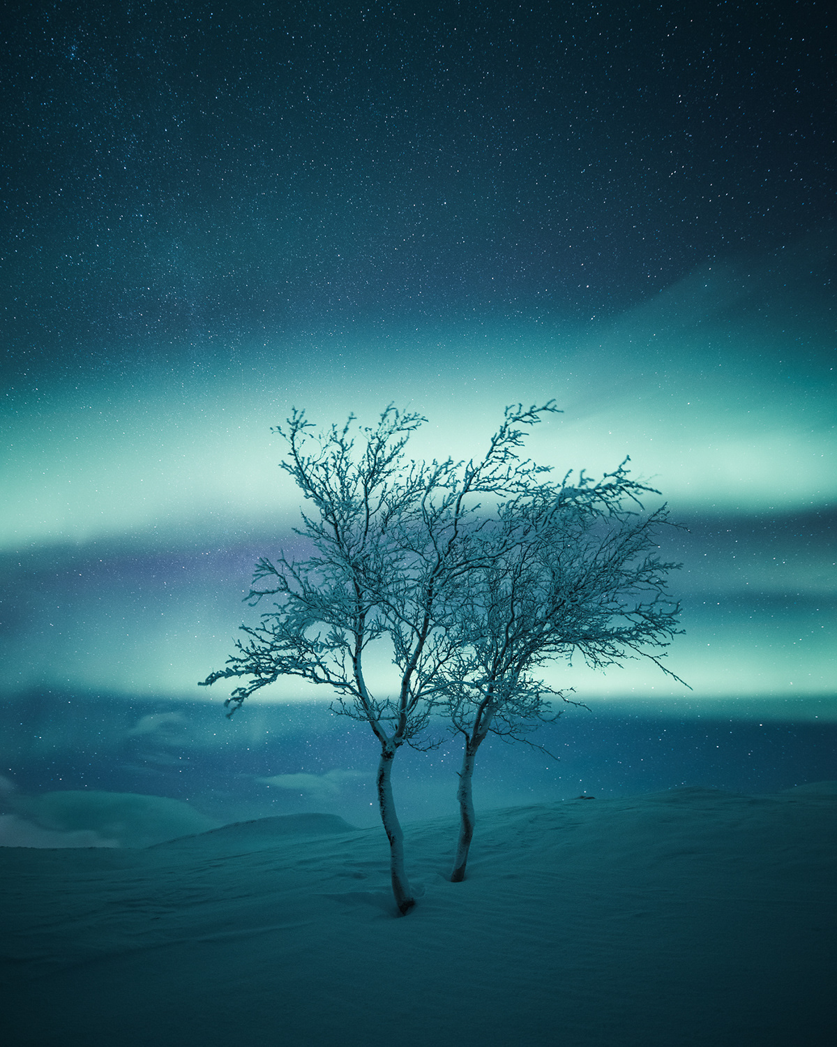 Trees of the North by Mikko Lagerstedt
