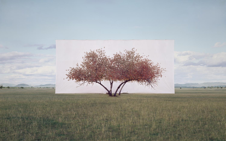 posed trees
