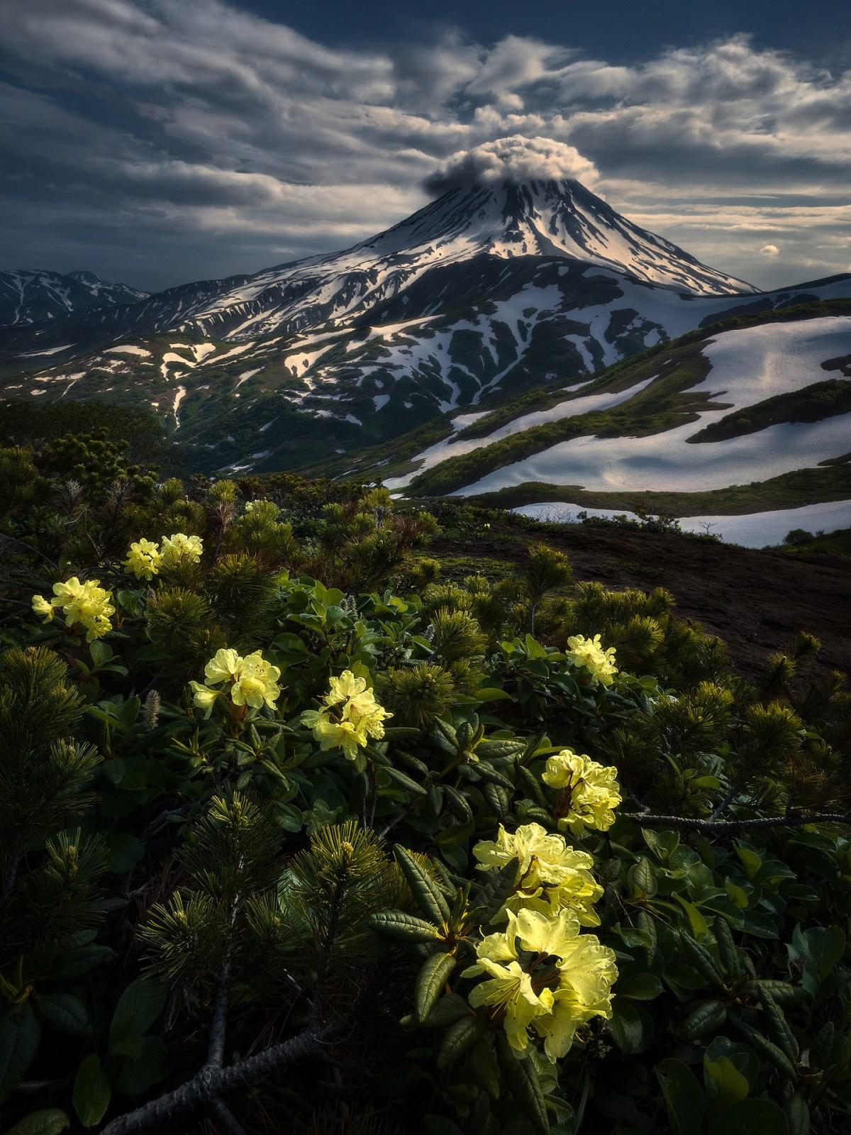kamchatka-moss-and-fog-7