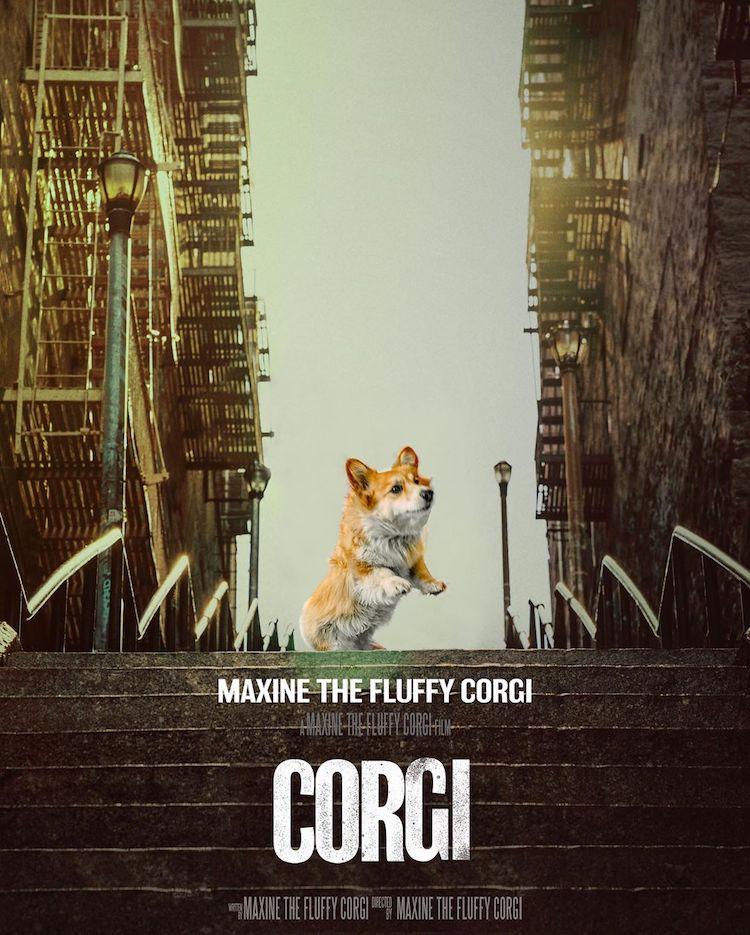 maxine-the-corgi-film-poster-recreations-2