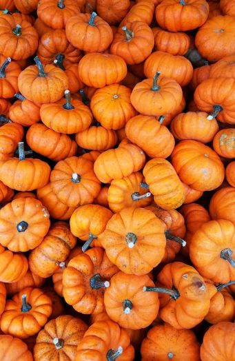 5 Stock Photo Images of Pumpkins and Gourds with Vibrant Color Variations