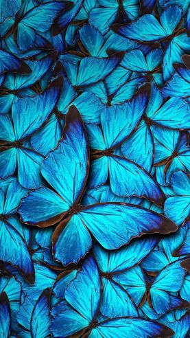 Blue Butterfly Background Picture