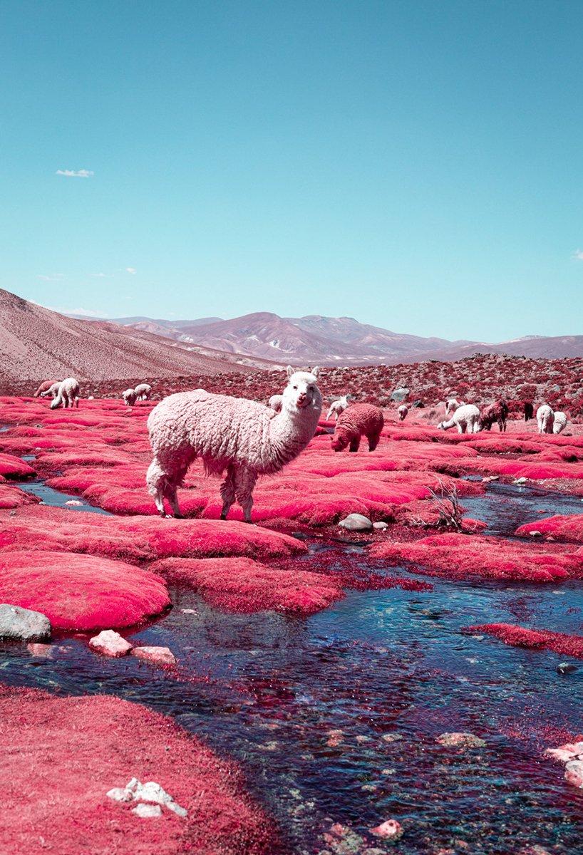 paolo-pettigiani-alpaca-river-infrared-photography-peru-moss-and-fog2