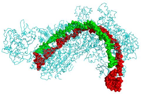 CRISPR Wikipedia en anglès
