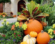 Pumpkin Lizzard
