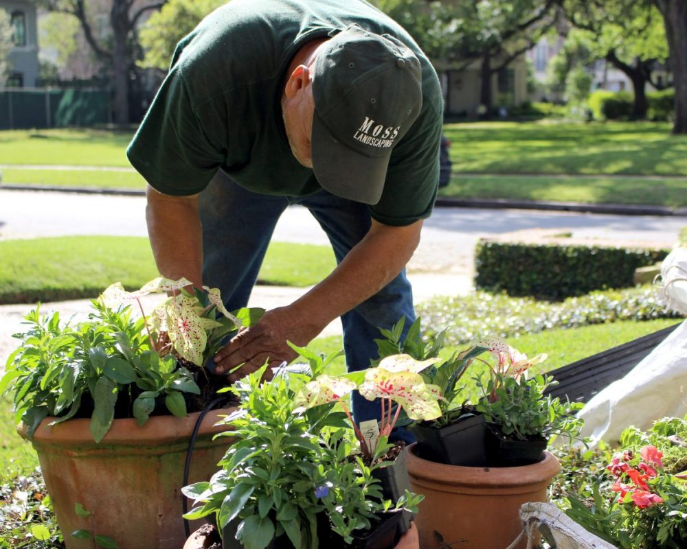 Planting Horizontal