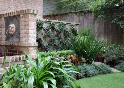 Backyard trellis.